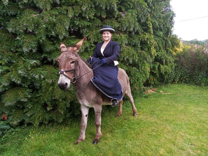 DUBLIN HORSE SHOW PREVIEW:  Donkeys on parade