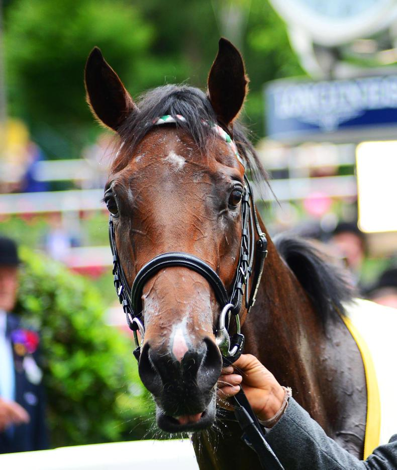 NEWS: Calyx retires to stand at Coolmore