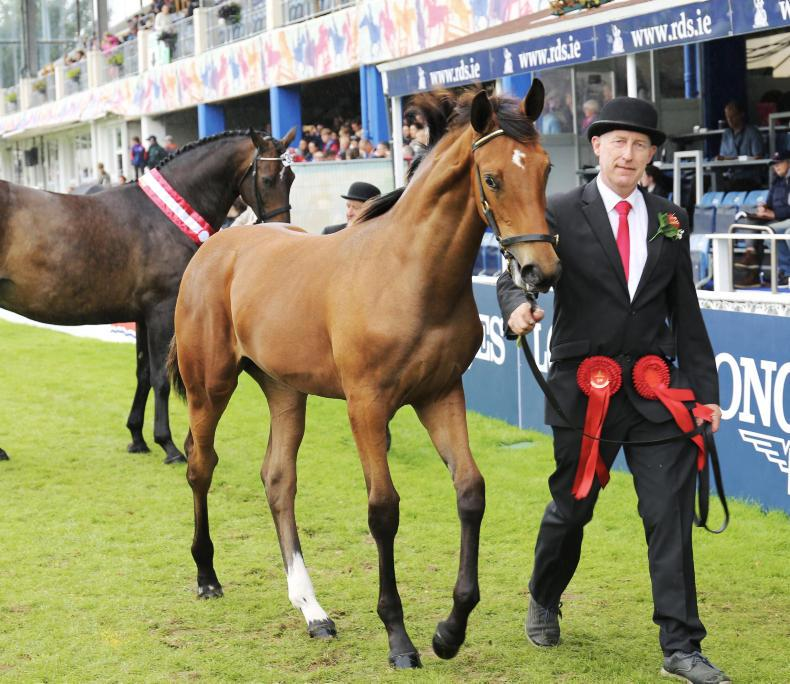 NEWS: No thoroughbred-sired foal class at RDS