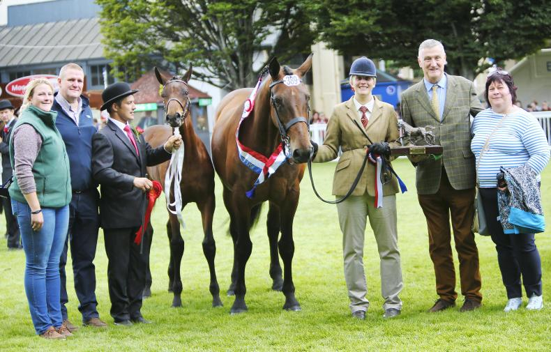 DUBLIN HORSE SHOW PREVIEW:  Pride and Passion