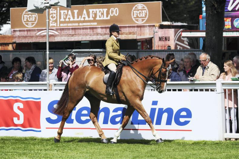 DUBLIN HORSE SHOW PREVIEW: Strong entries for show hunter division