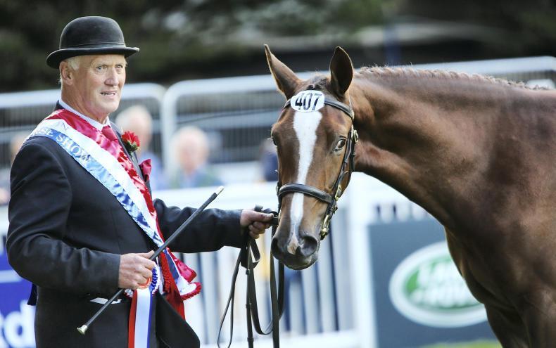 DUBLIN HORSE SHOW PREVIEW: Gibson set for busy week in Ballsbridge