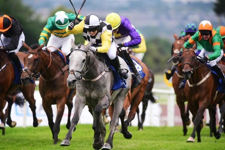 GALWAY SATURDAY PREVIEW: Great White Shark to cut through the pack again