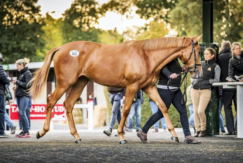 Galileo fillies head Goffs Orby catalogue