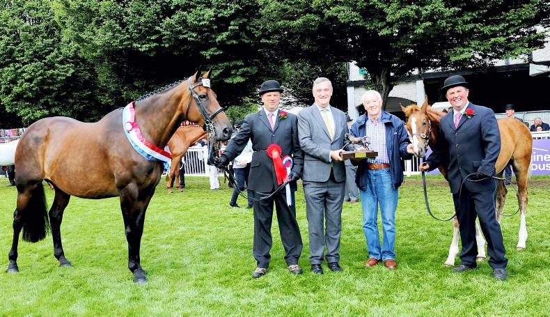 NEWS: Parkmore Evita takes the Breeders' Championship crown