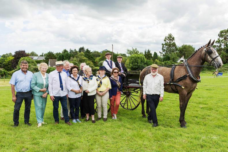 PONY TALES:  Get your entries in for Irish Draught showcase