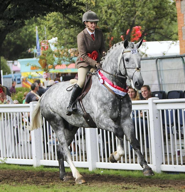 DUBLIN HORSE SHOW 2019:  Championship hat-trick for Gortfree Lakeside Lad