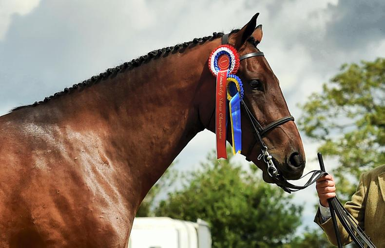 DUBLIN HORSE SHOW 2019: Rockwell RC lands Futurity championship