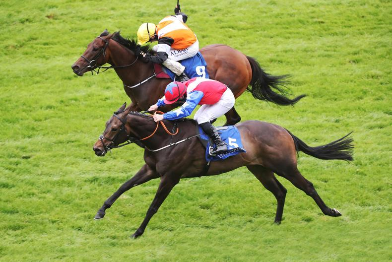 BREEDING INSIGHTS: Well-named son of Equiano