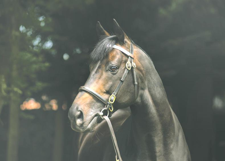 BREEDING INSIGHTS: West End Girl stars for her sire