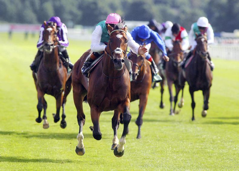From Triptych to Frankel - Rory Delargy's York memories