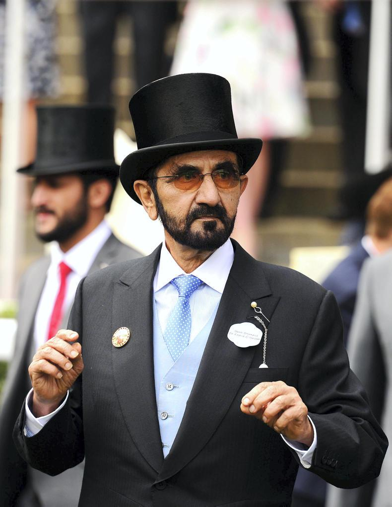 ARQANA YEARLING SALE: Sheikh Mohammed's spending spree