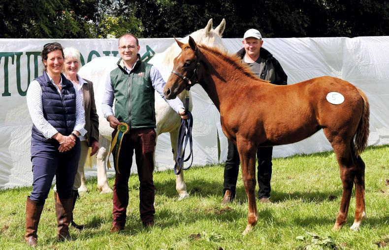 AROUND THE COUNTRY:  Quality foals forward for Cavan final