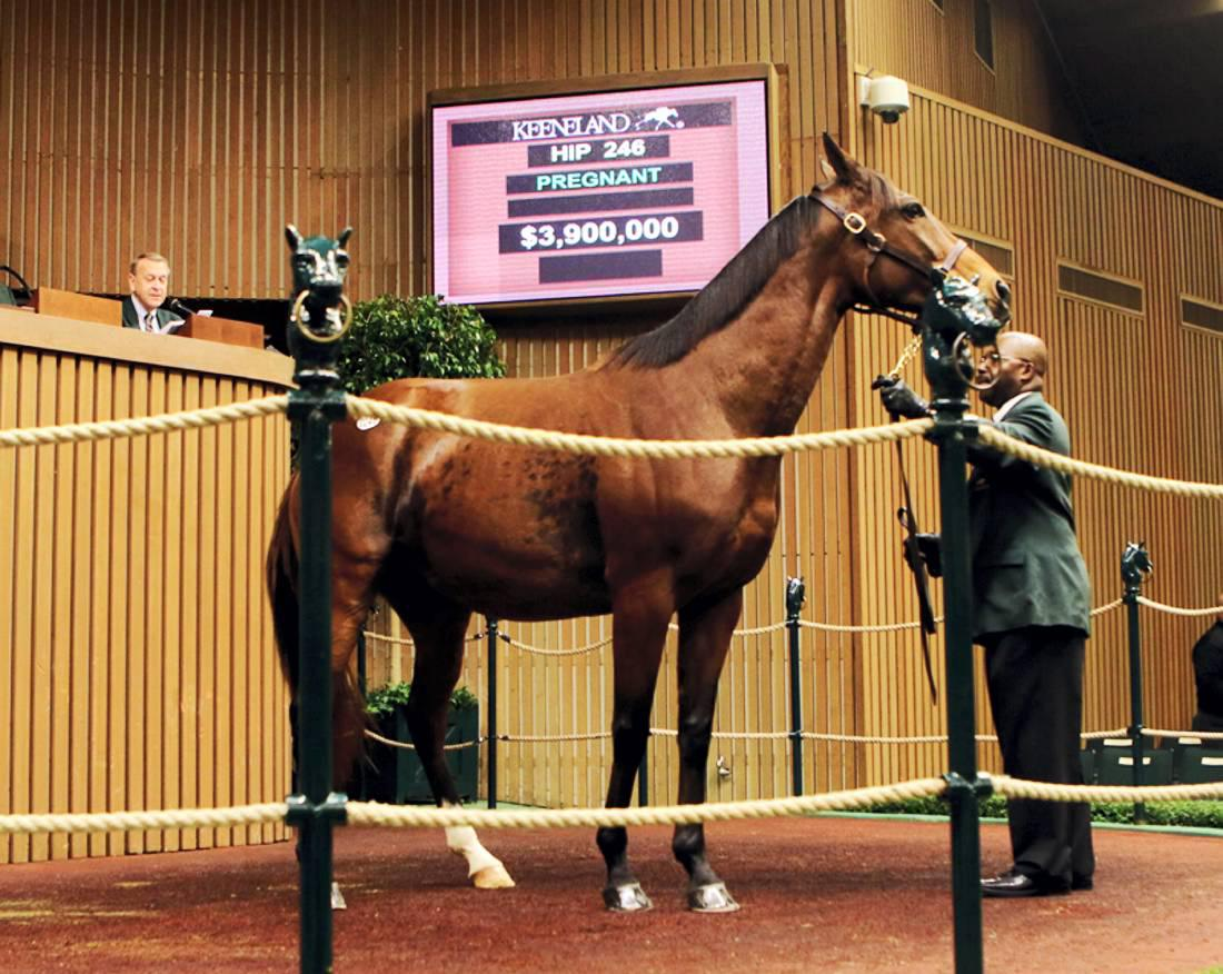 Review 2014: Tapit progeny steal the show at Keeneland