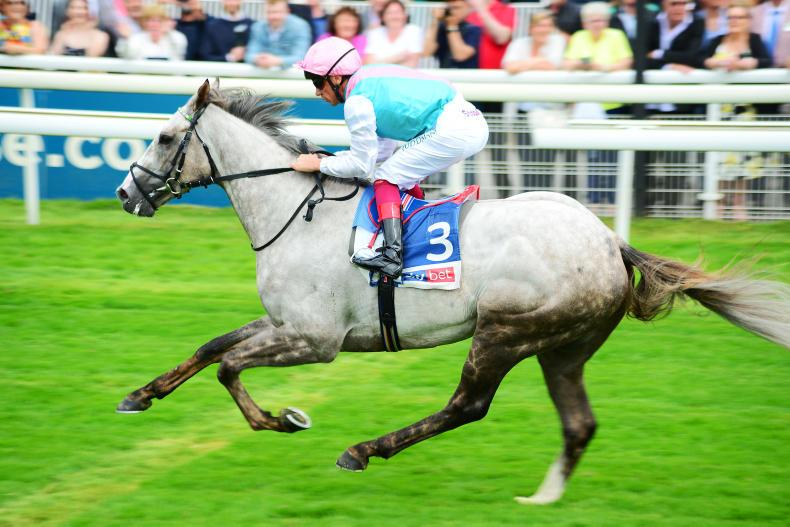PEDIGREE ANALYSIS: Frankel colt shows classic potential