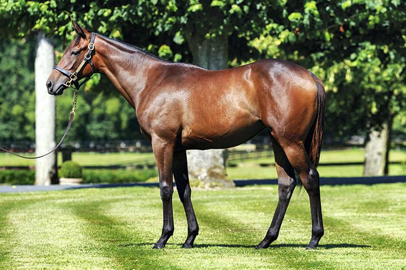 ARQANA YEARLING SALE: Prudenzia is Monceaux goldmine