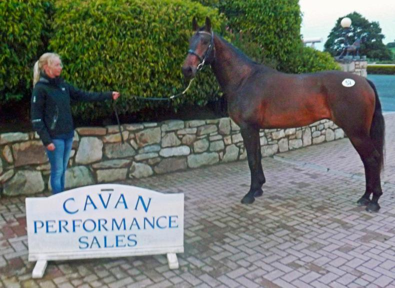 CAVAN SALES:  RDS winner fetches top price of €23,500