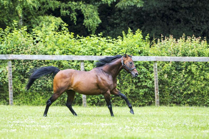 ARQANA YEARLING SALE: Skiffington's love for Kingman
