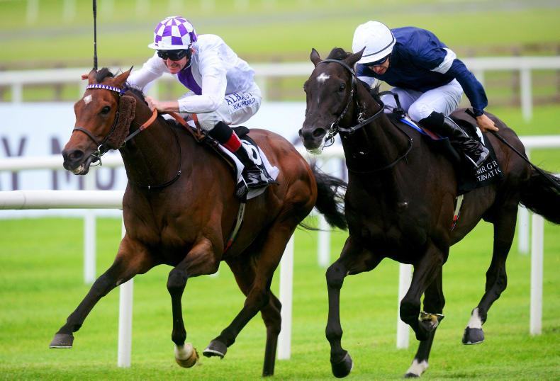 NEWS: Twilight Payment joins Joseph O'Brien stable