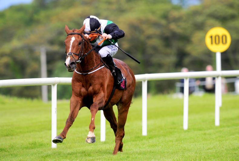 RYAN McELLIGOTT: Goffs results provide mixed forecast for pinhookers