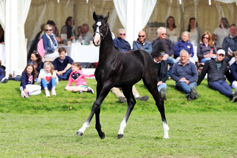 SALES: Top price of €24,000 for Chacco-Blue embryo