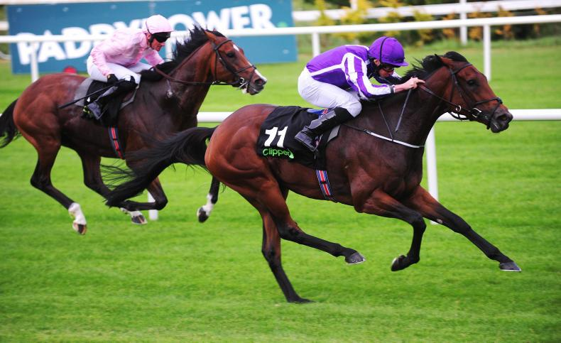MATRON STAKES: Fly high with O'Brien's filly in Matron