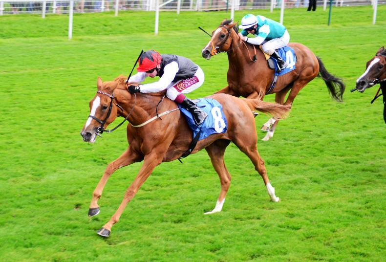 ICW NEWS: Weld fillies on Song for the Curragh
