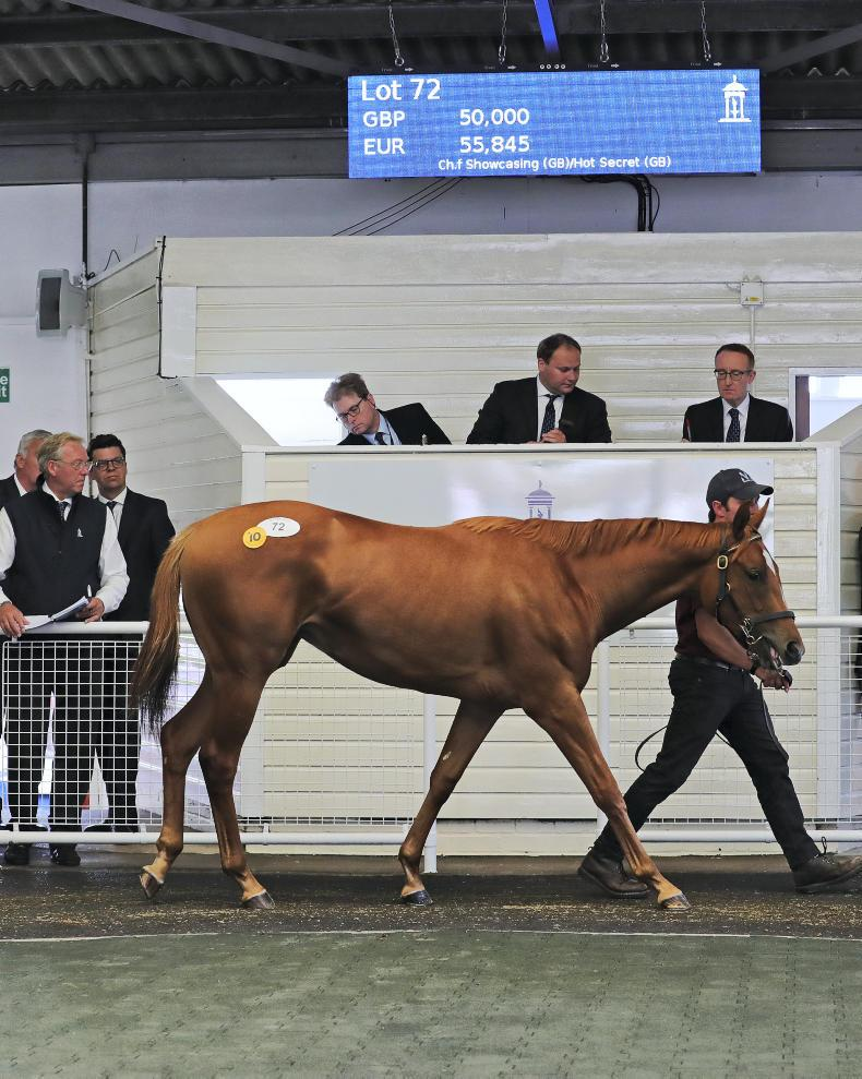 New yearling sale continues positive trend