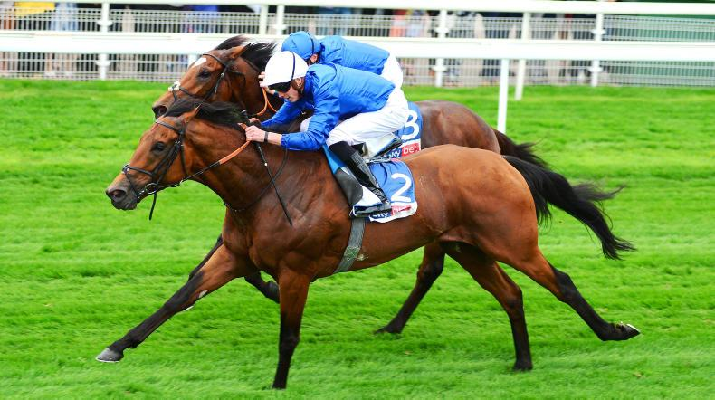 CANADIAN PREVIEW: Persian looks perfect for Grade 1 honours