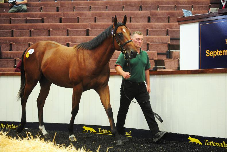 SALES: €100,000 colt heads solid opening to September Yearling Sale