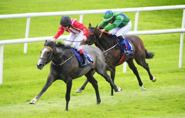 HORSES TO FOLLOW: Lord Rapscallion finds his form