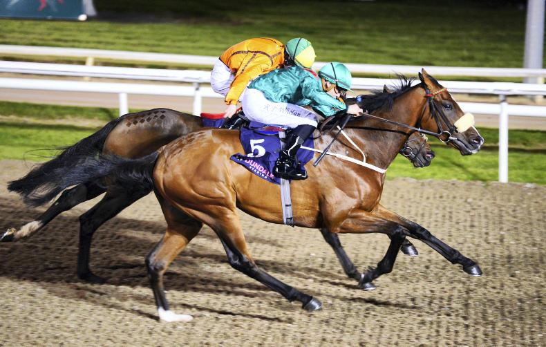 DUNDALK FRIDAY: Simsir is the star of the show