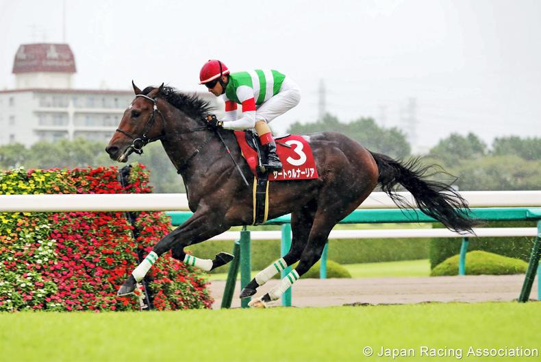 JAPAN: Saturnalia sets up possible Almond Eye clash
