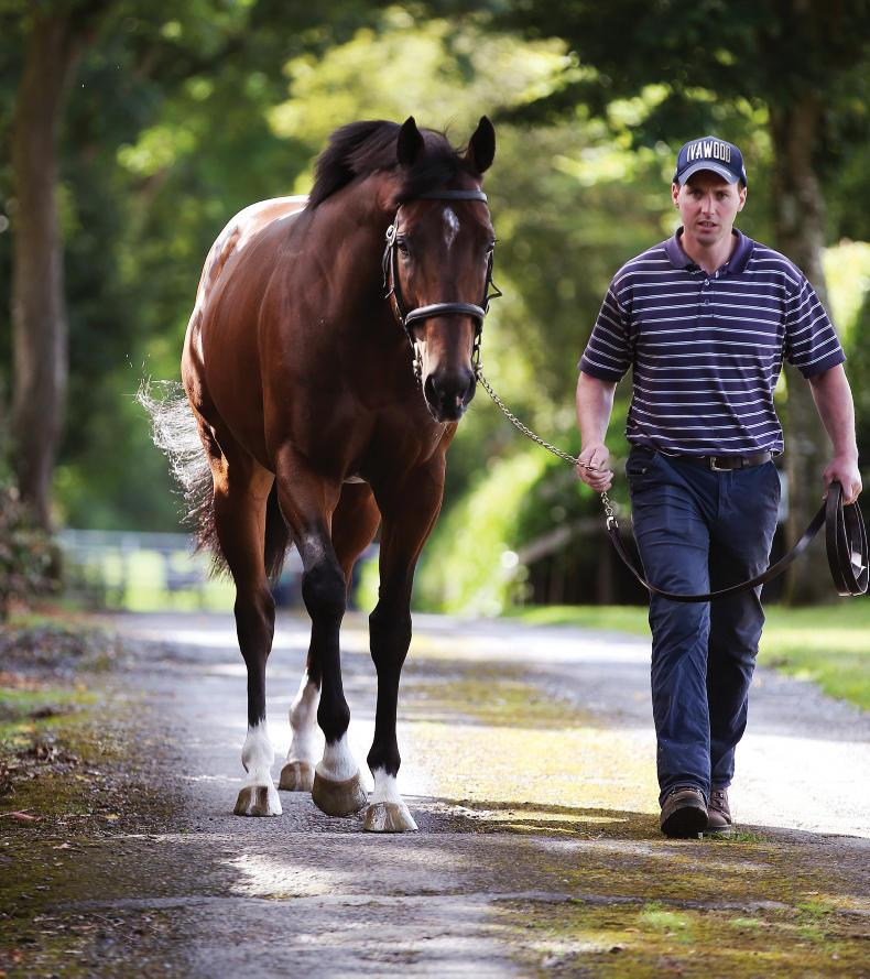 BREEDING INSIGHTS: First stakes winner for Ivawood comes under the hammer