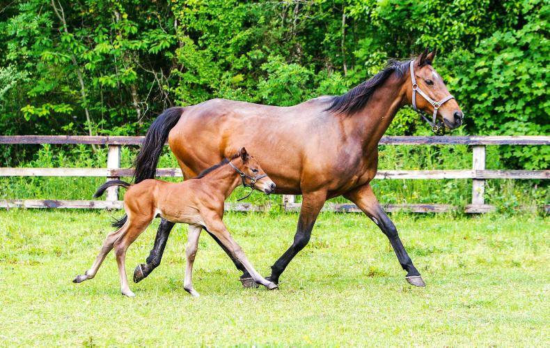Learn how to maximise success at the Equine Reproduction Symposium