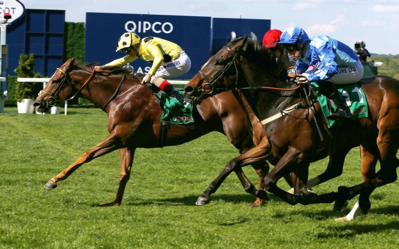 BRITISH PREVIEW: Ripp Orf can enhance excellent Ascot record