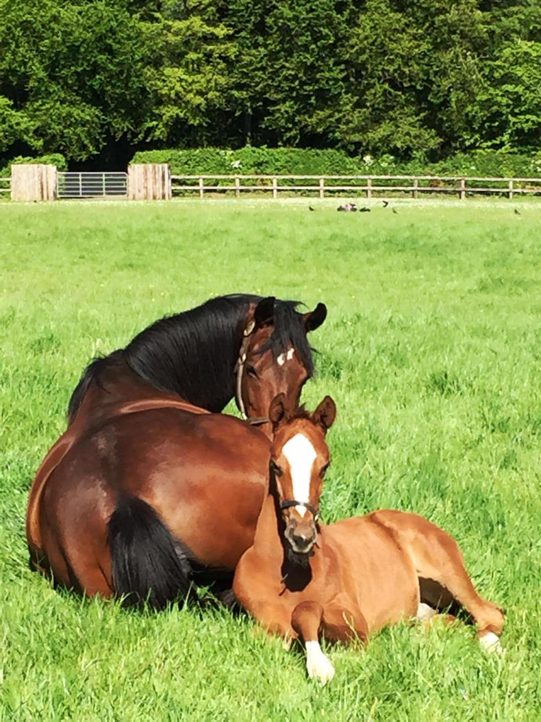 ADVERTORIAL: Smart Foaler by Happy Foaling
