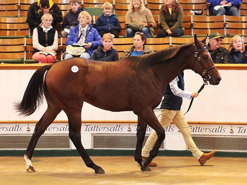 VIDEO: Sheikh Mohammed spends 3.6 million guineas on Dubawi colt