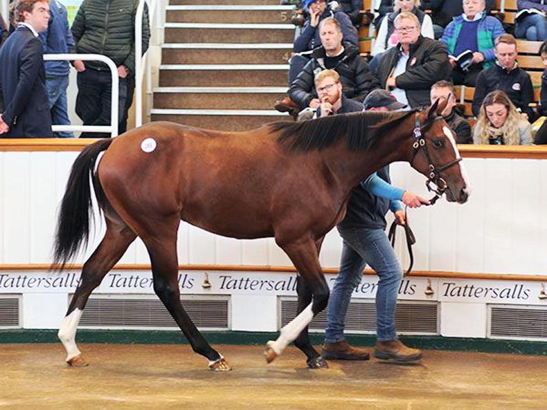 Norelands Stud sells Golden Horn half-brother for 3.1 million guineas