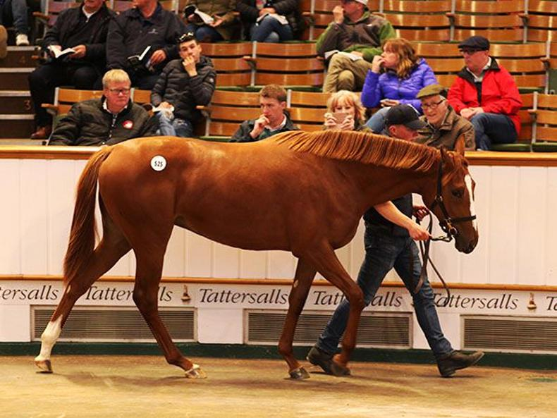 SALES: Barronstown Stud sells Galileo filly for 2,100,000 guineas