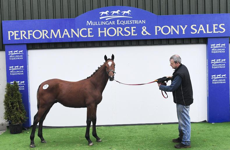 MULLINGAR SALES: Cormint colt tops sale at €6,800