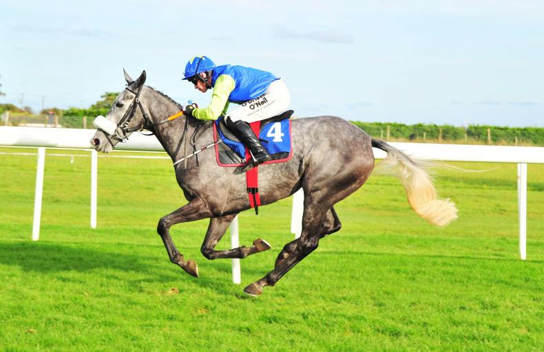 FAIRYHOUSE SATURDAY PREVIEW: Escape seeks a Flawless chase win
