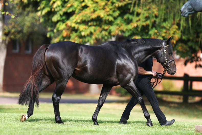 Coolmore purchase Maxios to stand at Castlehyde