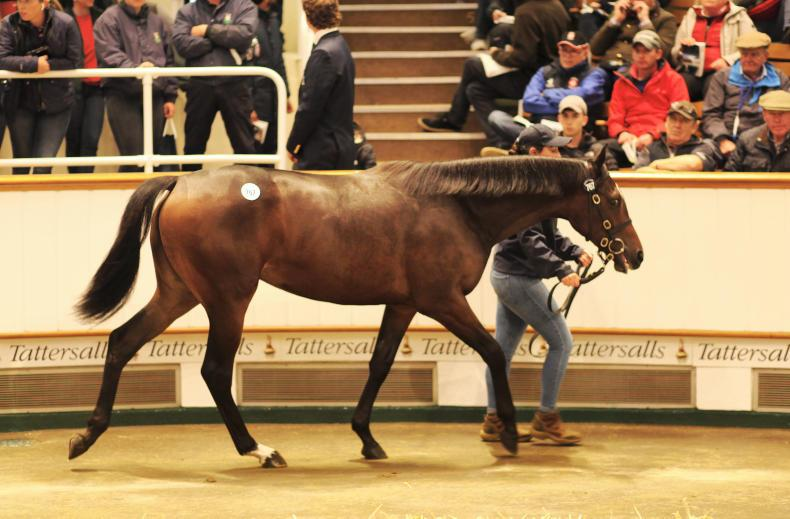 VIDEO: Trevor Stewart sells yearling filly for sale record price