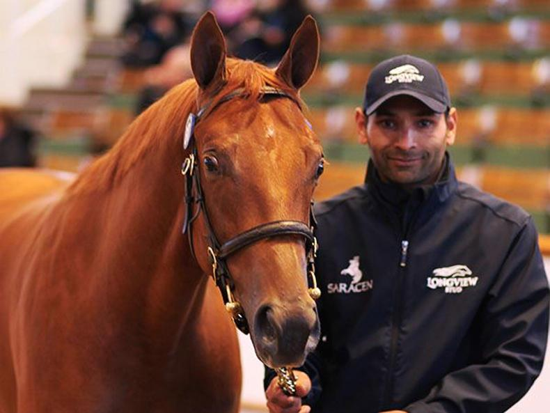 SALES: Colt and filly share top billing in Newmarket