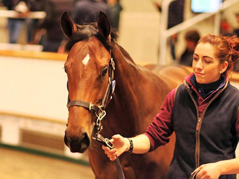 SALES: First-crop Territories filly sets Book 3 record of 145,000 guineas