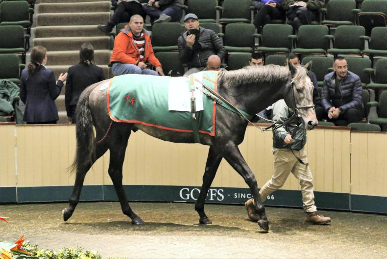 GOFFS AUTUMN HIT SALE: Horses in training fall off the pace