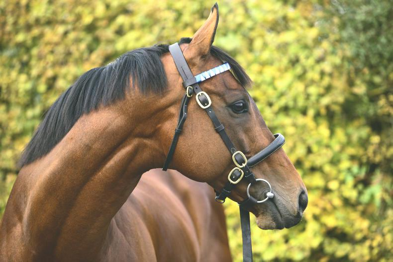 BREEDING INSIGHTS: All Change for Farhh