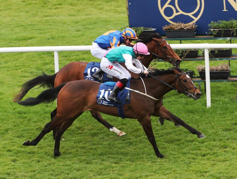 NAAS: Season finale has special offers for owners and racegoers