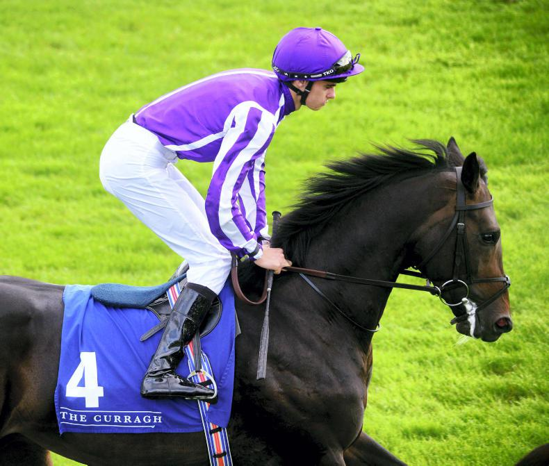 BRITISH PREVIEW: Innisfree can follow Ballydoyle pattern